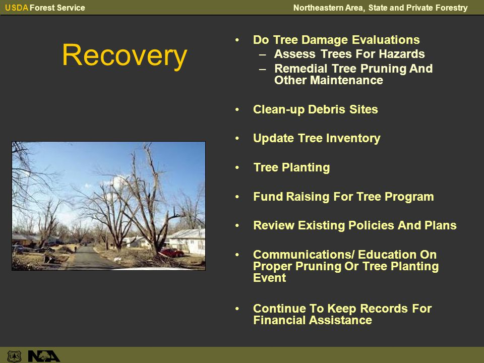 USDA Forest ServiceNortheastern Area, State and Private Forestry Recovery Do Tree Damage Evaluations –Assess Trees For Hazards –Remedial Tree Pruning And Other Maintenance Clean-up Debris Sites Update Tree Inventory Tree Planting Fund Raising For Tree Program Review Existing Policies And Plans Communications/ Education On Proper Pruning Or Tree Planting Event Continue To Keep Records For Financial Assistance