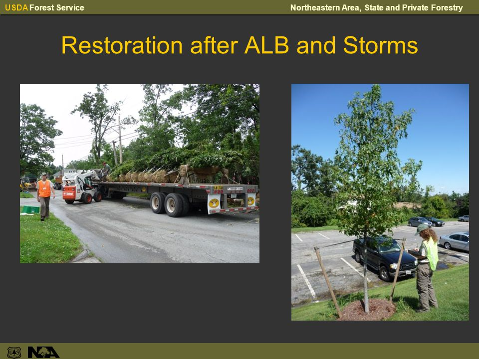 USDA Forest ServiceNortheastern Area, State and Private Forestry Restoration after ALB and Storms