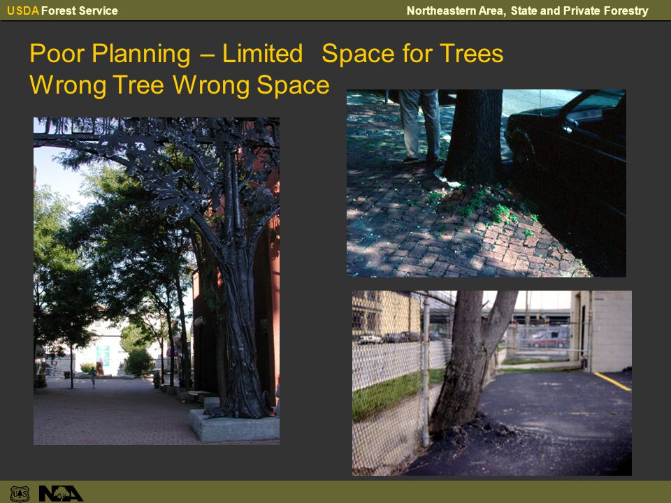 USDA Forest ServiceNortheastern Area, State and Private Forestry Poor Planning – Limited Space for Trees Wrong Tree Wrong Space