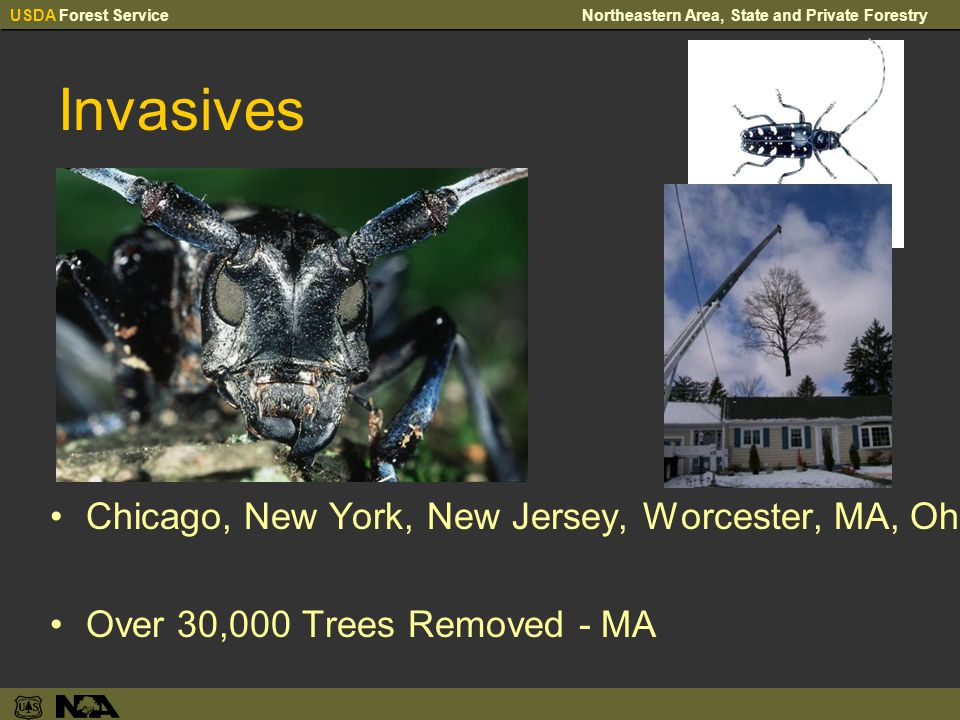 USDA Forest ServiceNortheastern Area, State and Private Forestry Invasives Chicago, New York, New Jersey, Worcester, MA, Ohio Over 30,000 Trees Removed - MA
