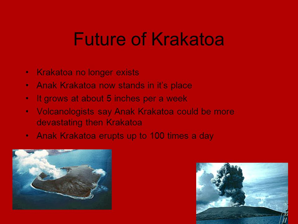 Future of Krakatoa Krakatoa no longer exists Anak Krakatoa now stands in it's place It grows at about 5 inches per a week Volcanologists say Anak Krakatoa could be more devastating then Krakatoa Anak Krakatoa erupts up to 100 times a day
