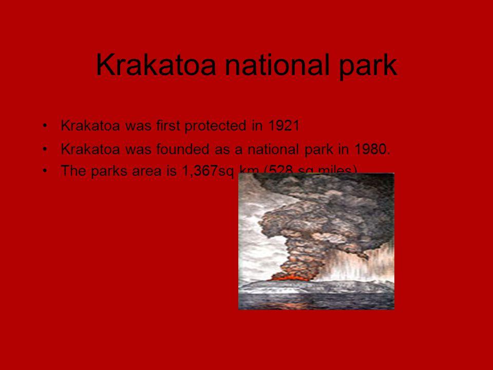 Krakatoa national park Krakatoa was first protected in 1921 Krakatoa was founded as a national park in 1980.