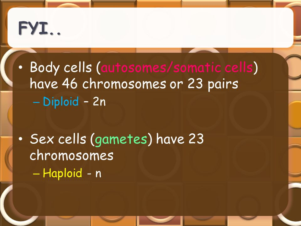 FYI.. Body cells (autosomes/somatic cells) have 46 chromosomes or 23 pairs – Diploid – 2n Sex cells (gametes) have 23 chromosomes – Haploid - n