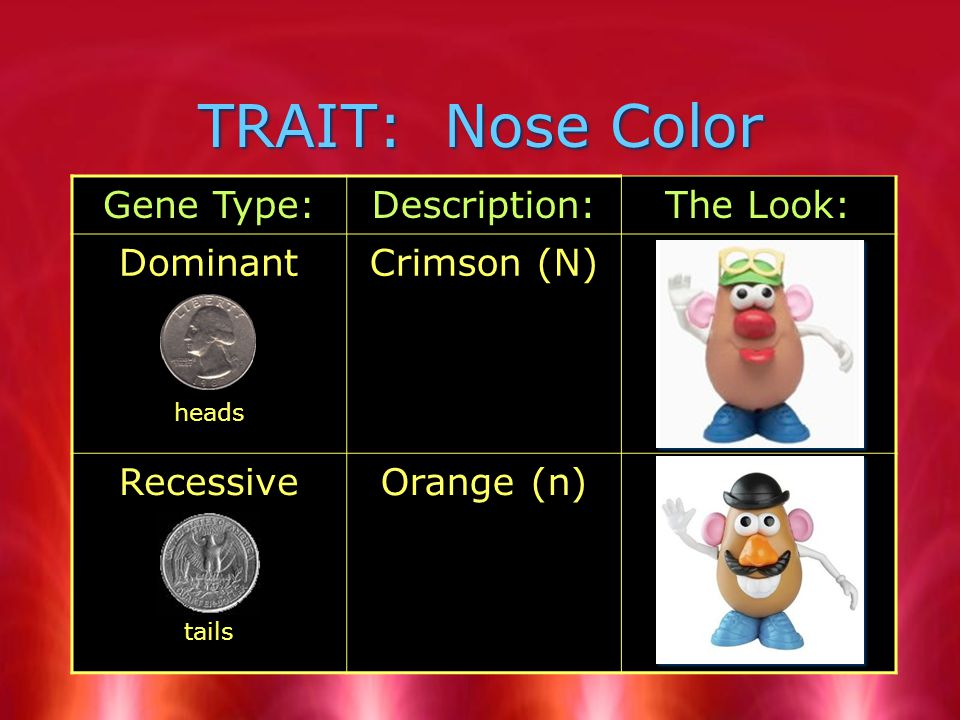 TRAIT: Nose Color Gene Type:Description:The Look: Dominant heads Crimson (N) Recessive tails Orange (n)
