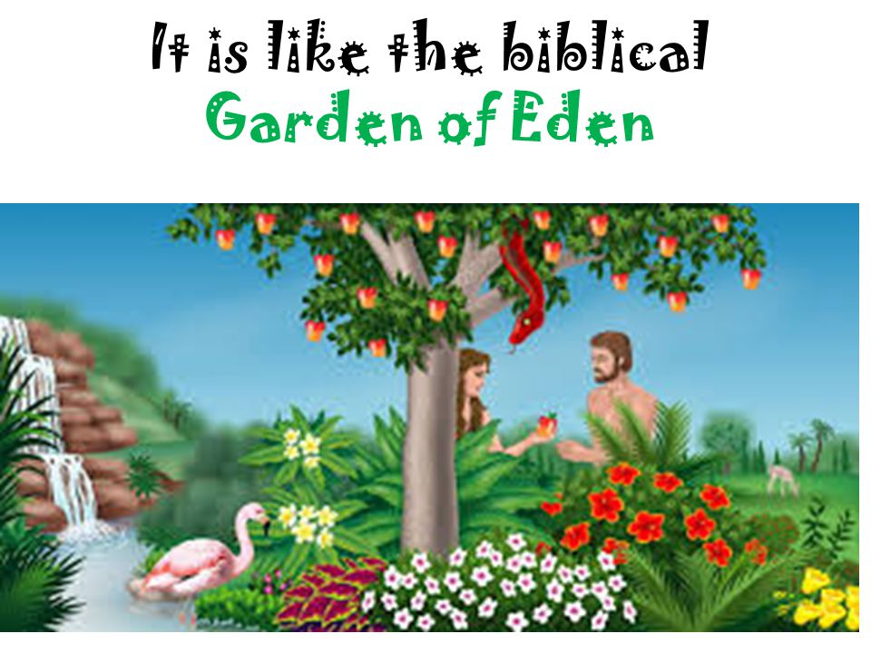 The Bible Story The Garden of Eden is a paradise for Adam and Eve until the snake convinces Eve to eat an apple from the tree of knowledge of good and evil, breaking God's rule against it.