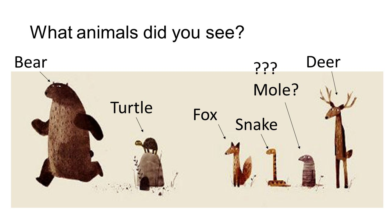 What animals did you see? Bear Turtle Fox Snake ??? Mole? Deer