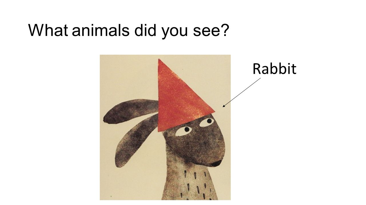What animals did you see Rabbit