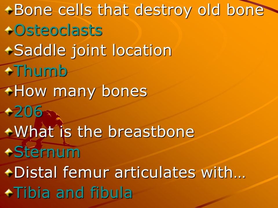 Bone cells that destroy old bone Osteoclasts Saddle joint location Thumb How many bones 206 What is the breastbone Sternum Distal femur articulates wi