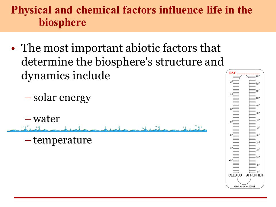 The most important abiotic factors that determine the biosphere's structure and dynamics include –solar energy –water –temperature Physical and chemic