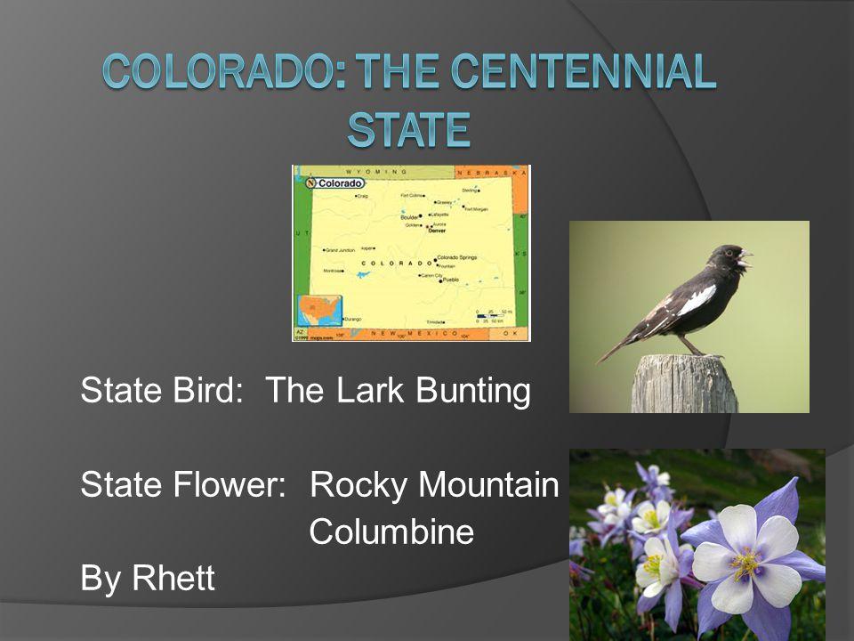State Bird: The Lark Bunting State Flower: Rocky Mountain Columbine By Rhett