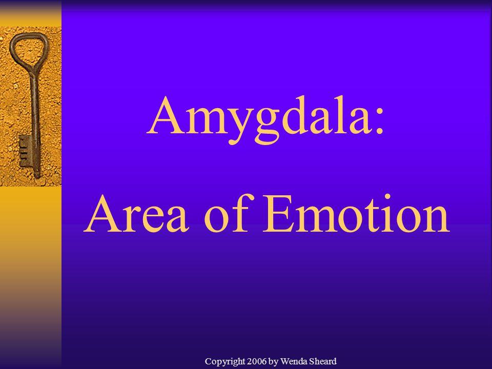 Copyright 2006 by Wenda Sheard Amygdala: Area of Emotion