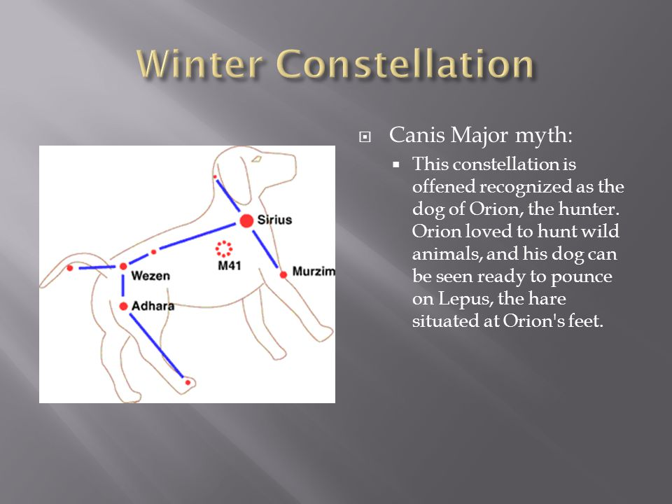  Canis Major myth:  This constellation is offened recognized as the dog of Orion, the hunter. Orion loved to hunt wild animals, and his dog can be s