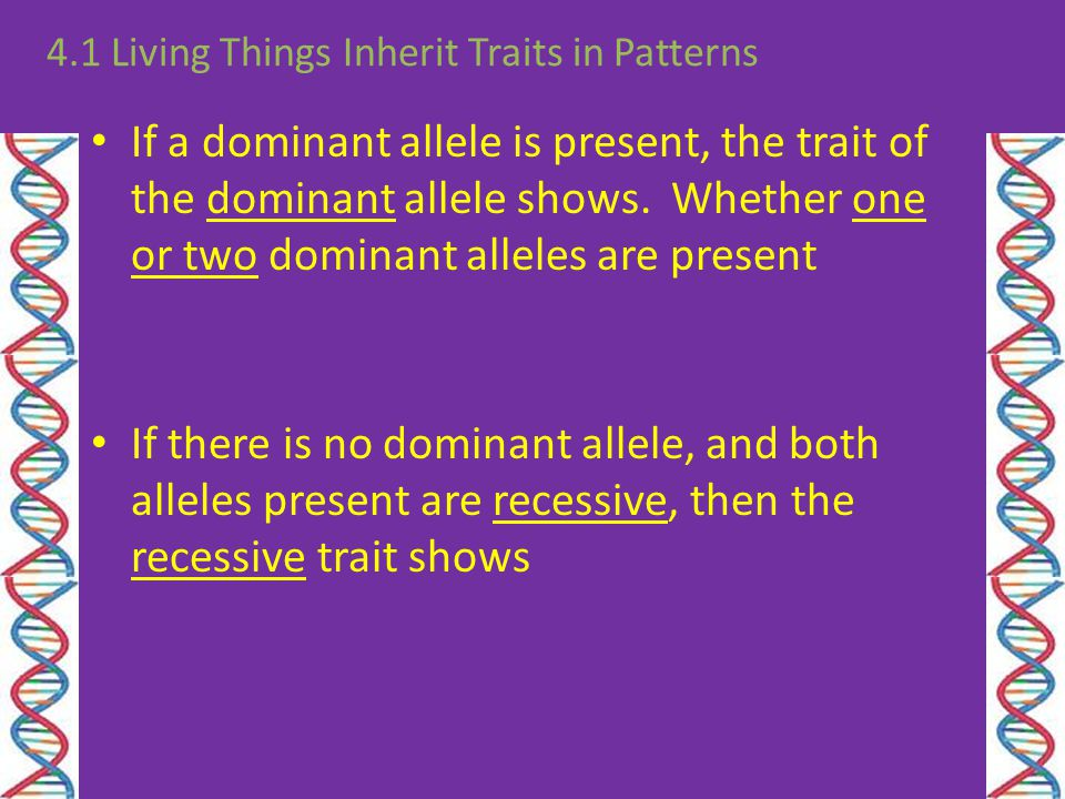 If a dominant allele is present, the trait of the dominant allele shows. Whether one or two dominant alleles are present 4.1 Living Things Inherit Tra