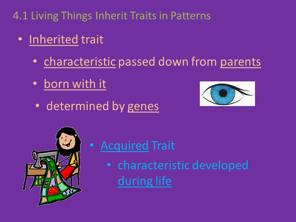 4.1 Living Things Inherit Traits in Patterns Inherited trait Acquired Trait characteristic developed during life characteristic passed down from paren