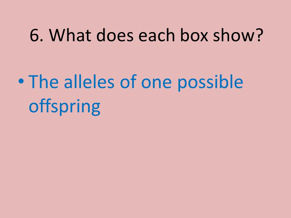 6. What does each box show? The alleles of one possible offspring