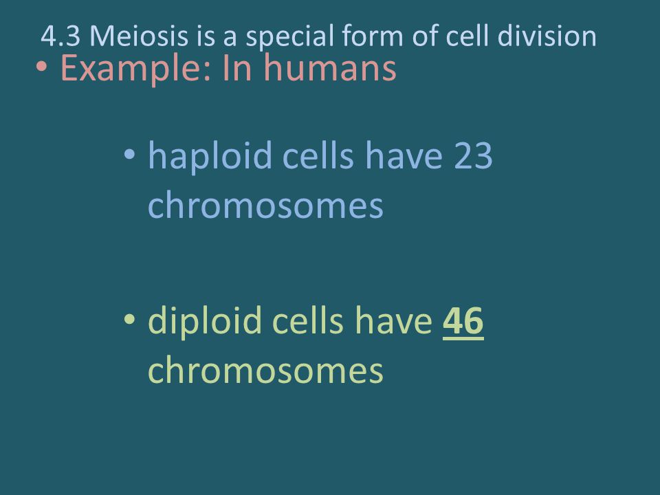 Example: In humans haploid cells have 23 chromosomes diploid cells have 46 chromosomes 4.3 Meiosis is a special form of cell division