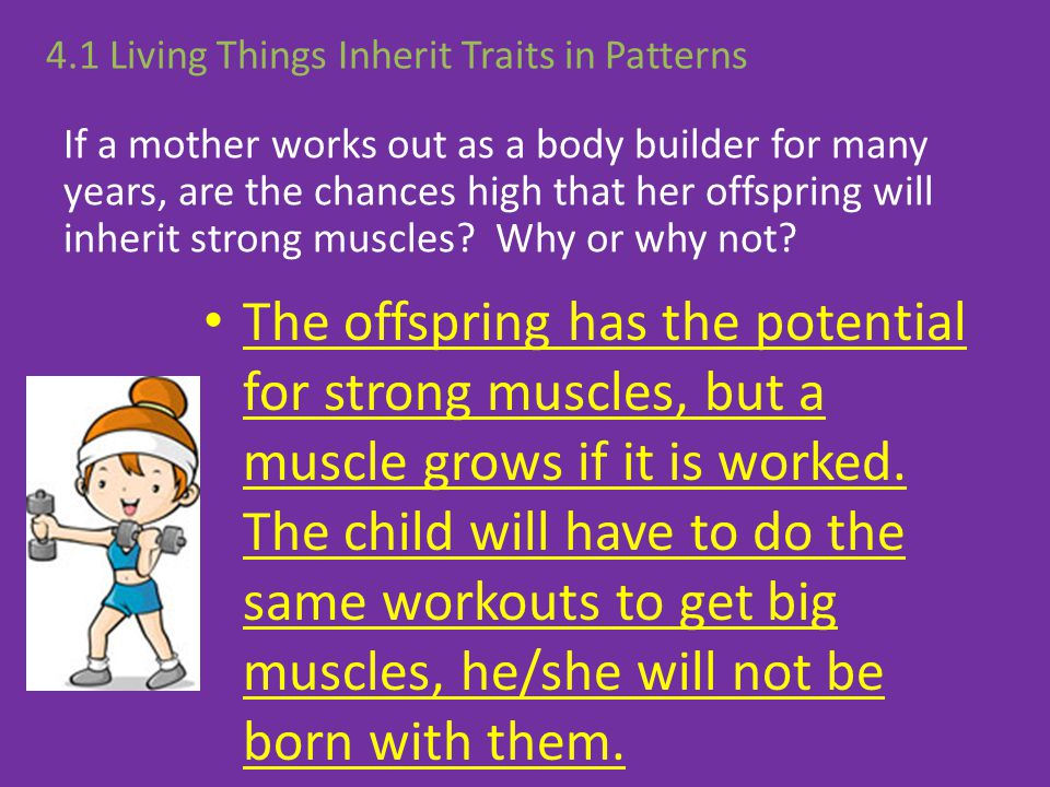 If a mother works out as a body builder for many years, are the chances high that her offspring will inherit strong muscles? Why or why not? The offsp
