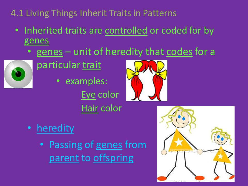 Inherited traits are controlled or coded for by genes heredity Passing of genes from parent to offspring genes – unit of heredity that codes for a par