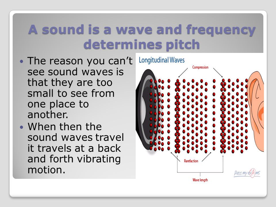 A sound is a wave and frequency determines pitch 3. One of the main parts of the inner ear, the cochlea contains about 30,000 hair cells. Each of thes