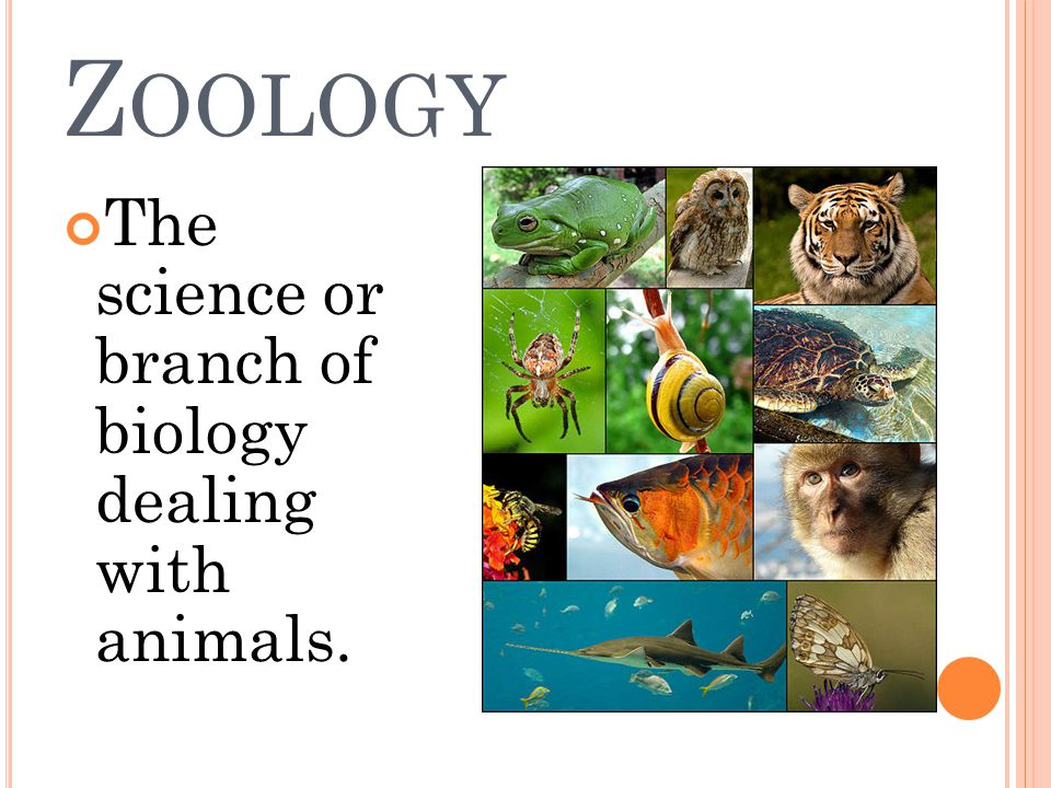 Z OOLOGY The science or branch of biology dealing with animals.