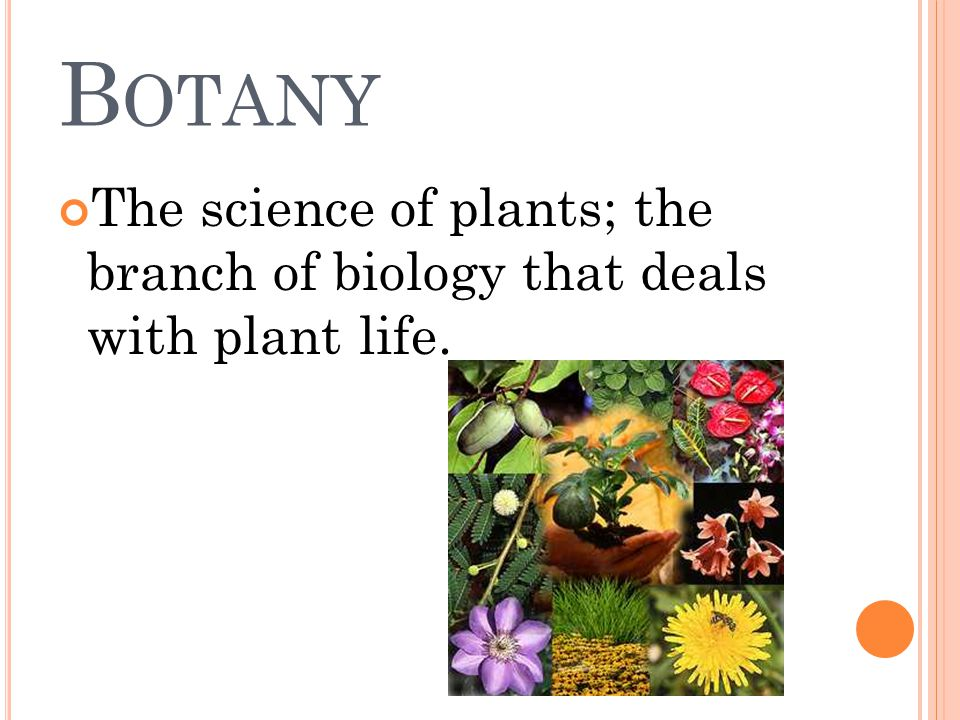 B OTANY The science of plants; the branch of biology that deals with plant life.