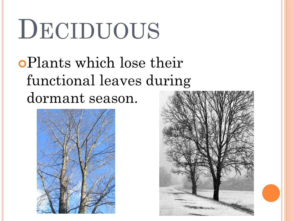 D ECIDUOUS Plants which lose their functional leaves during dormant season.