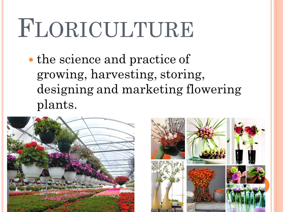 F LORICULTURE the science and practice of growing, harvesting, storing, designing and marketing flowering plants.
