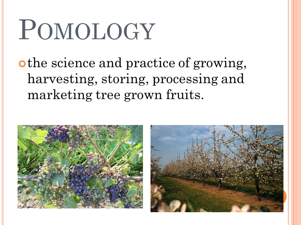 P OMOLOGY the science and practice of growing, harvesting, storing, processing and marketing tree grown fruits.