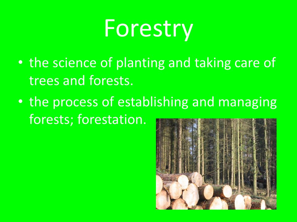 Forestry the science of planting and taking care of trees and forests. the process of establishing and managing forests; forestation.