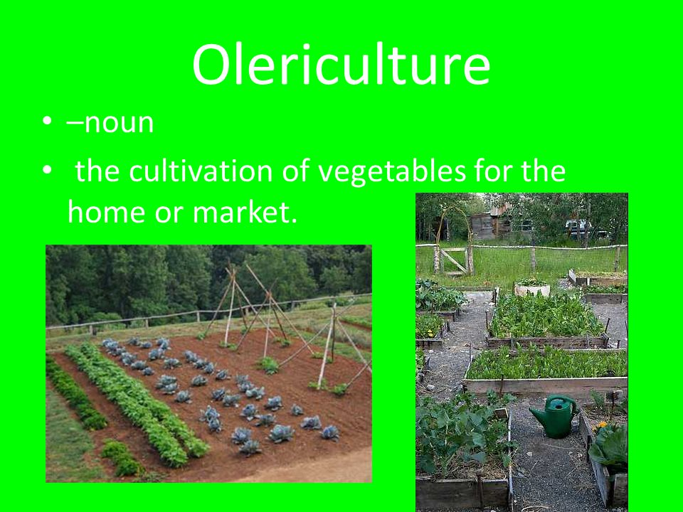 Olericulture –noun the cultivation of vegetables for the home or market.
