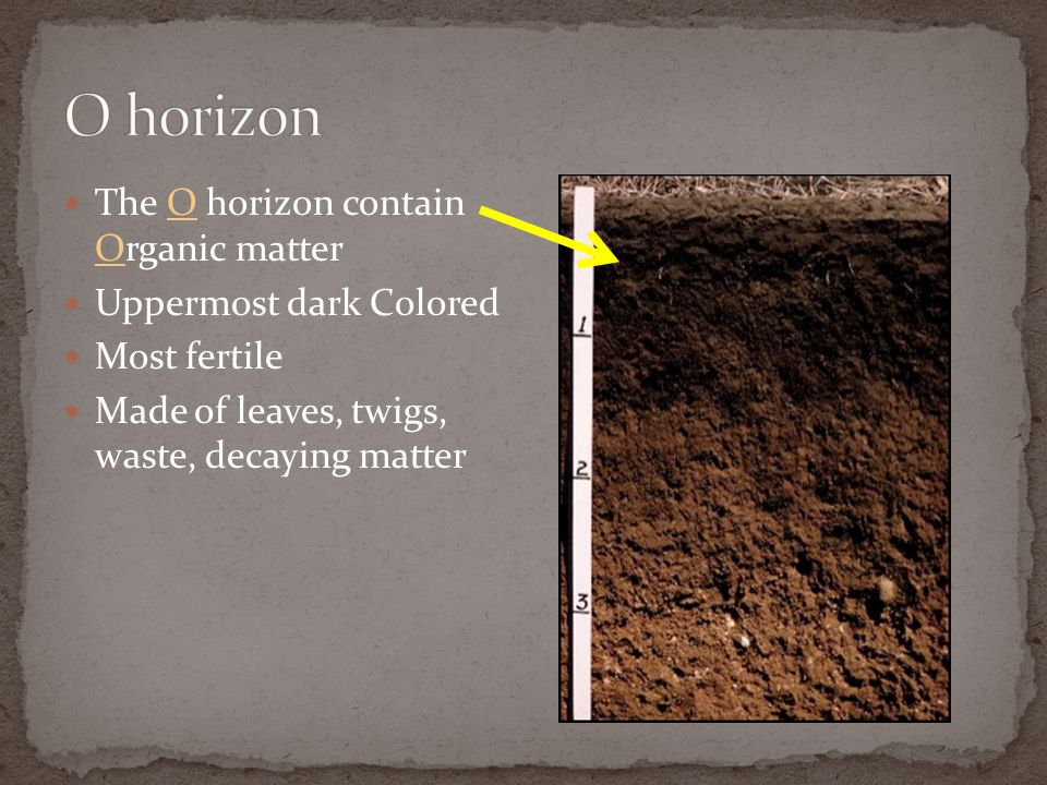 The O horizon contain Organic matter Uppermost dark Colored Most fertile Made of leaves, twigs, waste, decaying matter
