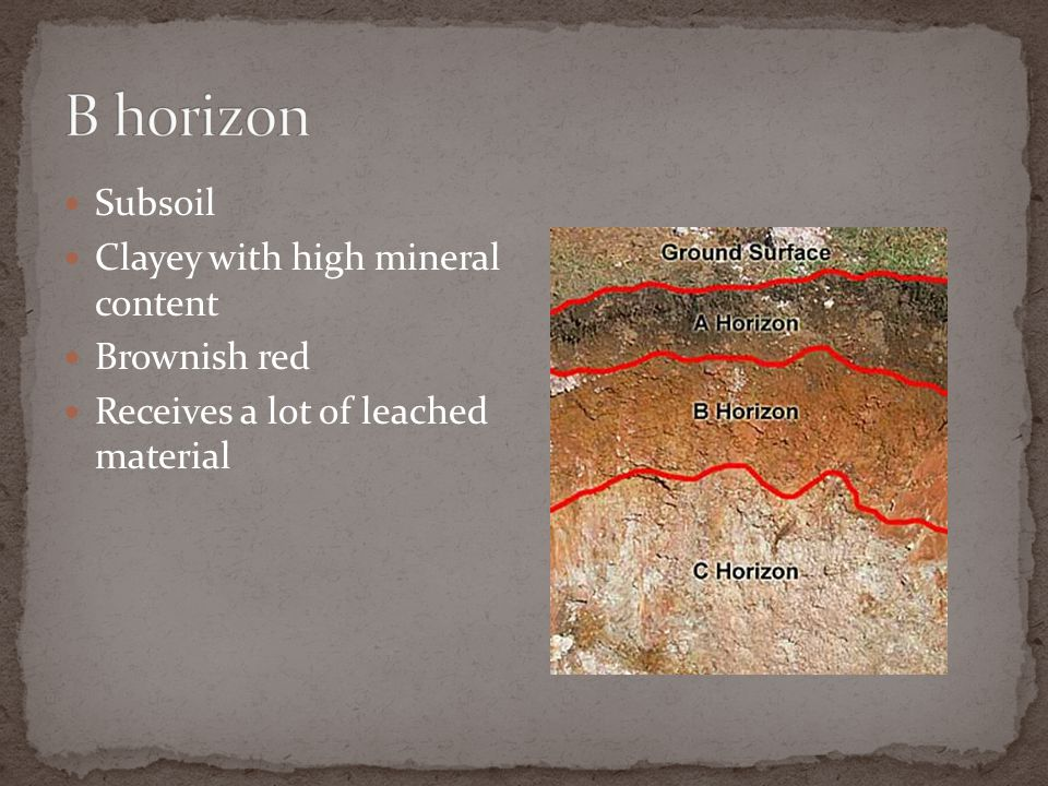 Subsoil Clayey with high mineral content Brownish red Receives a lot of leached material