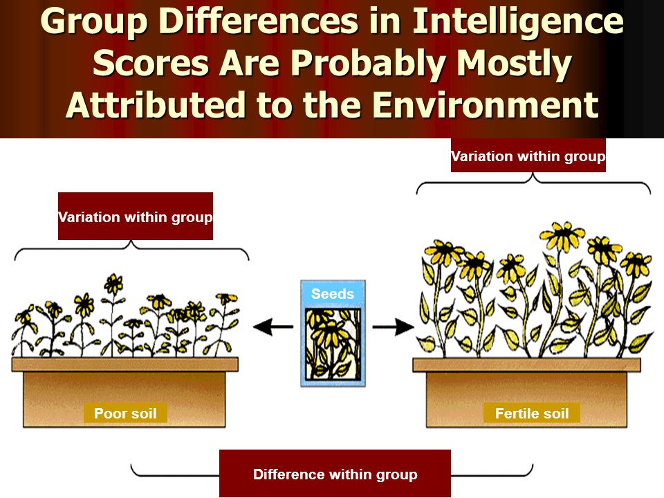 Group Differences in Intelligence Scores Are Probably Mostly Attributed to the Environment Variation within group Difference within group Poor soilFertile soil Seeds