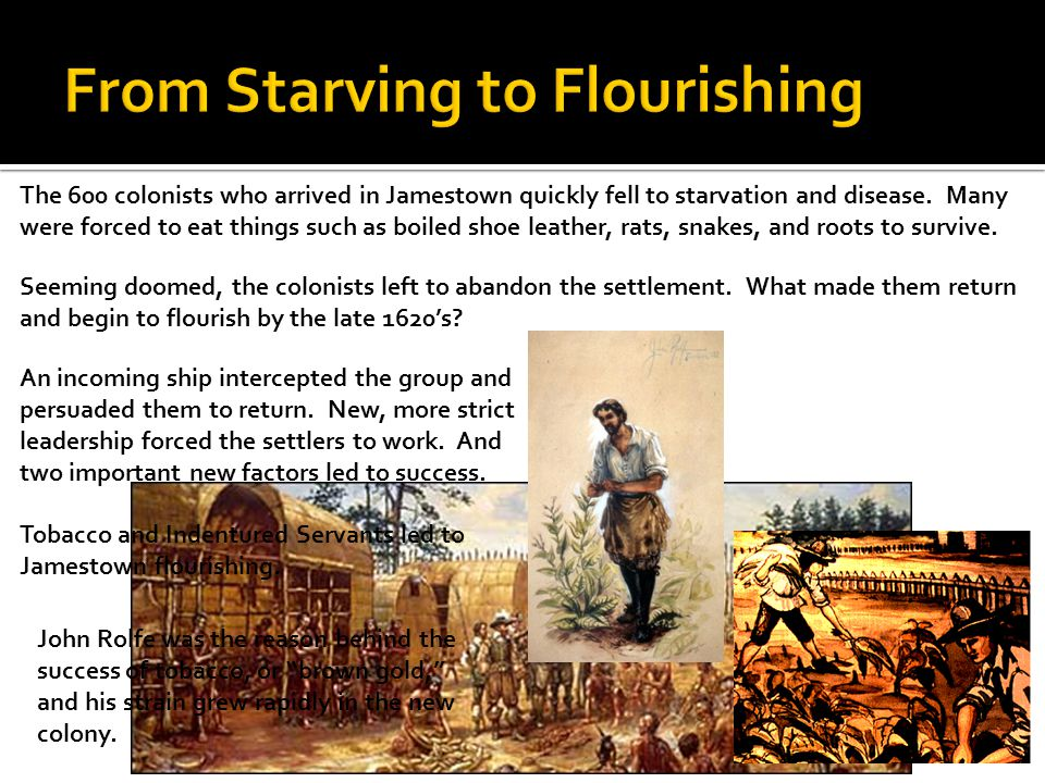 The 600 colonists who arrived in Jamestown quickly fell to starvation and disease. Many were forced to eat things such as boiled shoe leather, rats, s