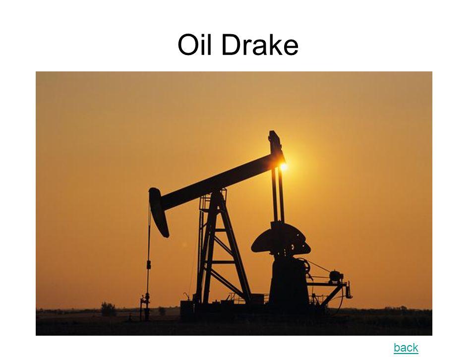 Oil Drake back