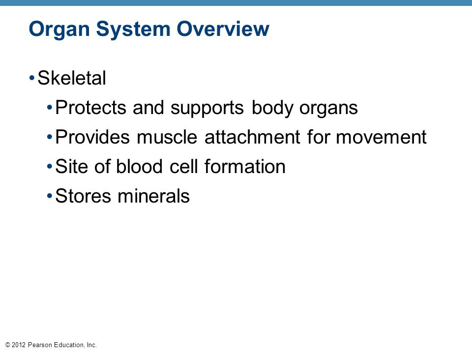 © 2012 Pearson Education, Inc. Organ System Overview Skeletal Protects and supports body organs Provides muscle attachment for movement Site of blood