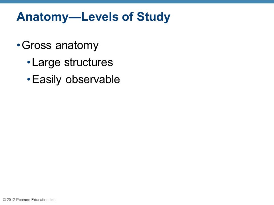 © 2012 Pearson Education, Inc. Anatomy—Levels of Study Gross anatomy Large structures Easily observable