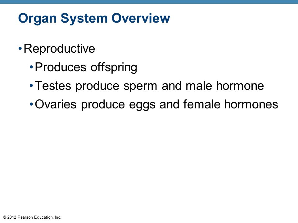 © 2012 Pearson Education, Inc. Reproductive Produces offspring Testes produce sperm and male hormone Ovaries produce eggs and female hormones Organ Sy