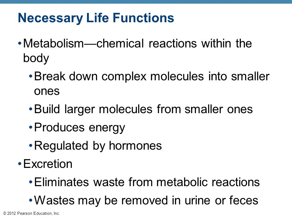 © 2012 Pearson Education, Inc. Necessary Life Functions Metabolism—chemical reactions within the body Break down complex molecules into smaller ones B