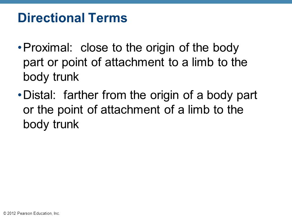 © 2012 Pearson Education, Inc. Directional Terms Proximal: close to the origin of the body part or point of attachment to a limb to the body trunk Dis