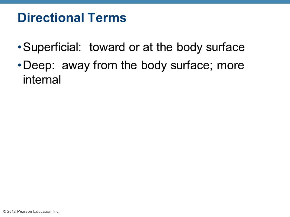 © 2012 Pearson Education, Inc. Directional Terms Superficial: toward or at the body surface Deep: away from the body surface; more internal