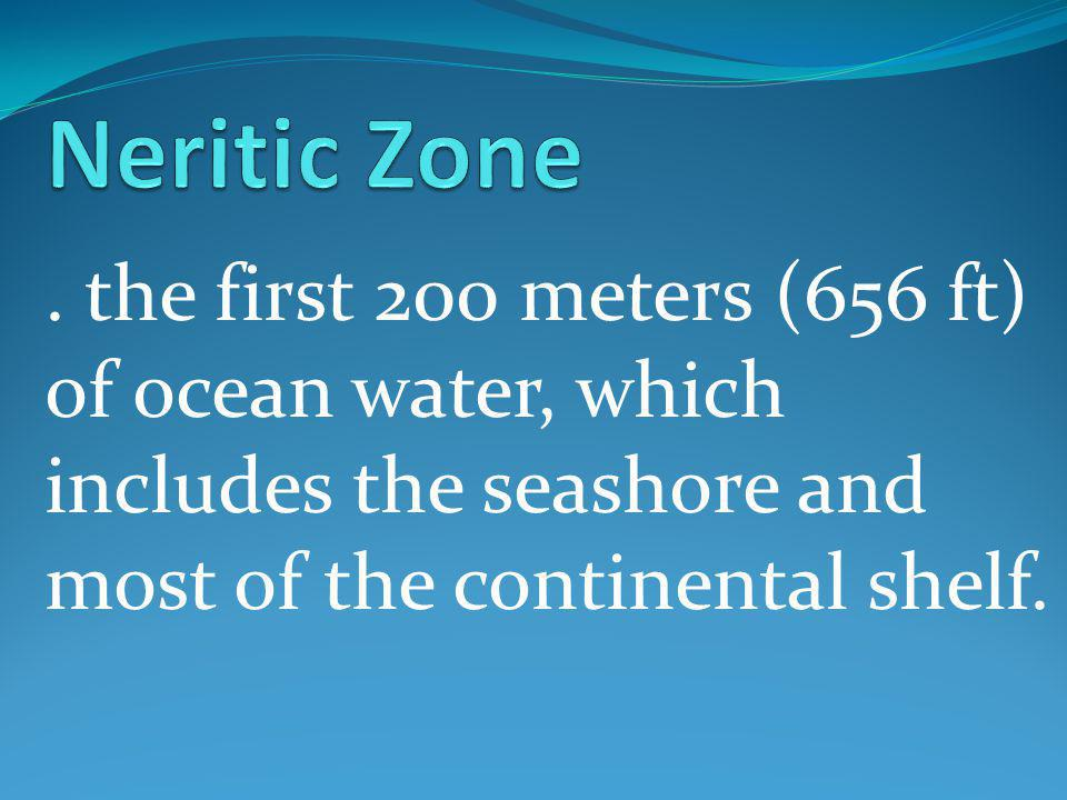 . the first 200 meters (656 ft) of ocean water, which includes the seashore and most of the continental shelf.