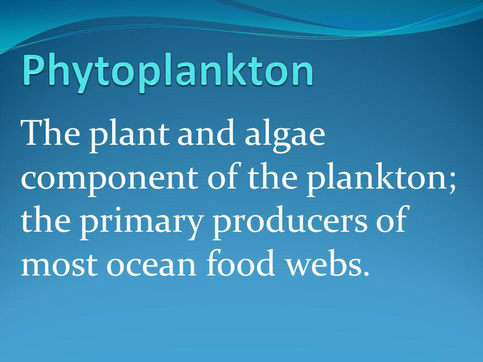 The plant and algae component of the plankton; the primary producers of most ocean food webs.