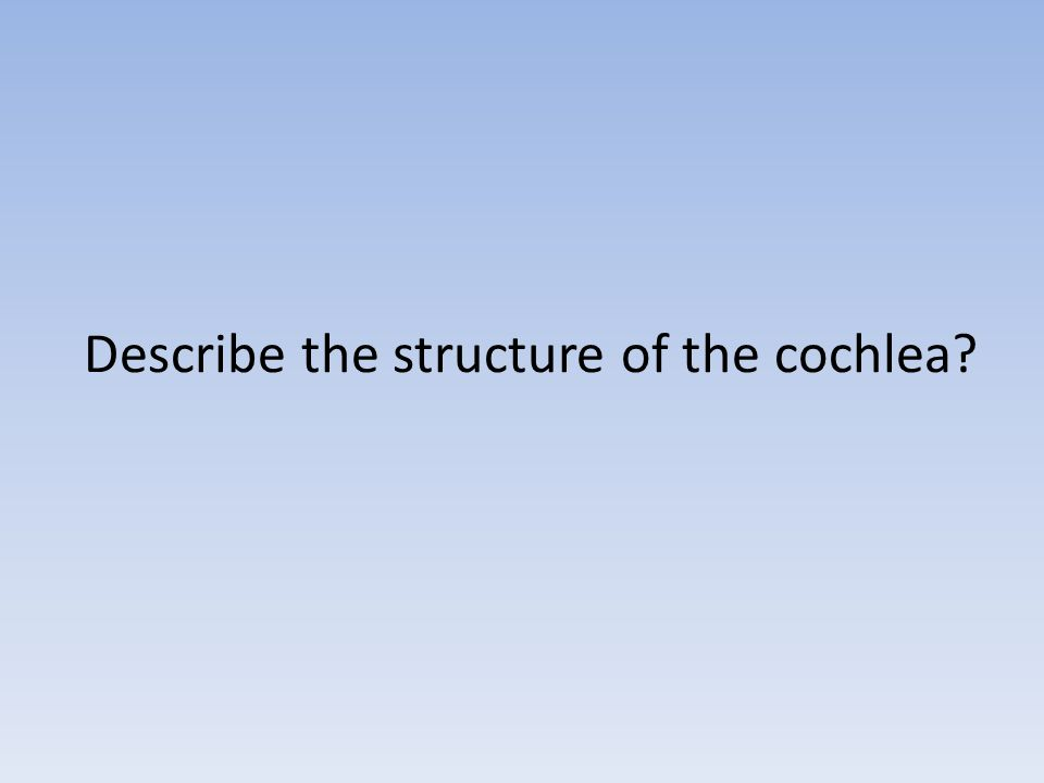 Describe the structure of the cochlea