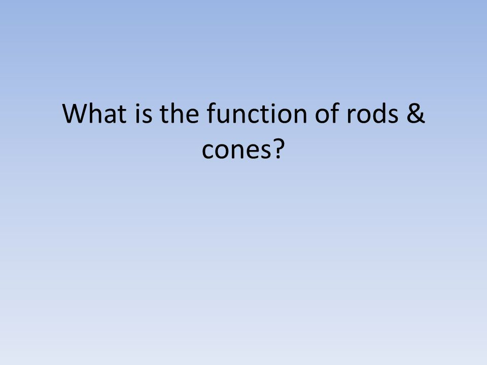 What is the function of rods & cones