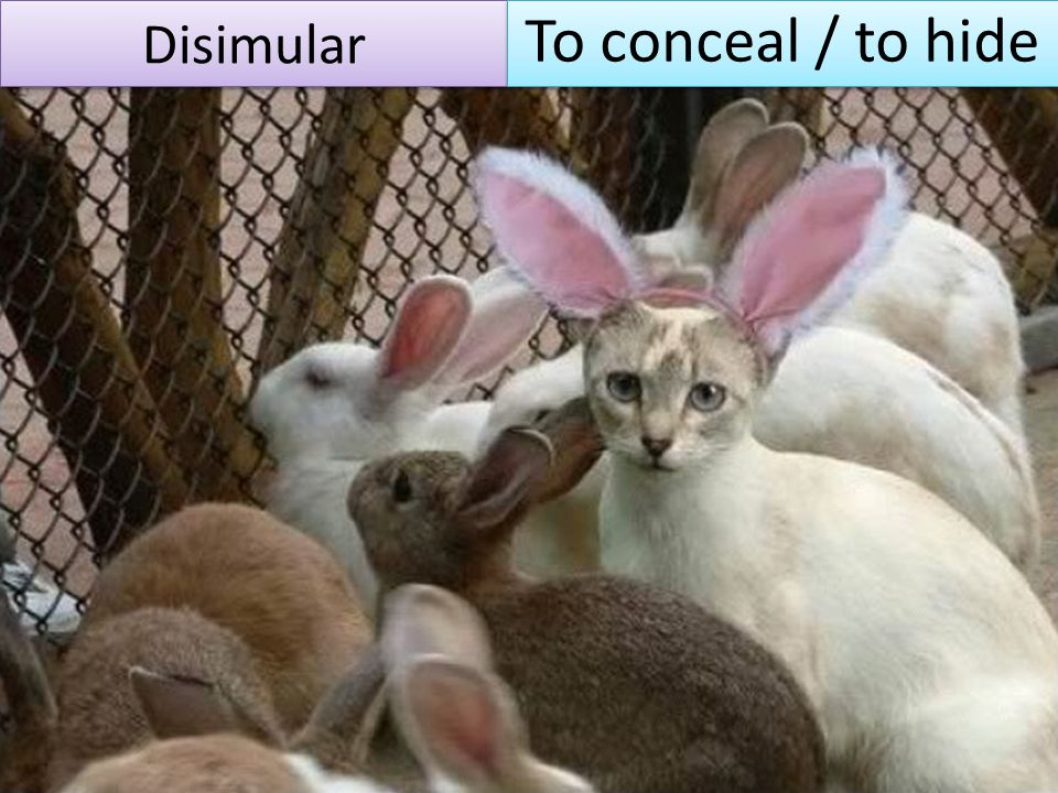 Disimular To conceal / to hide