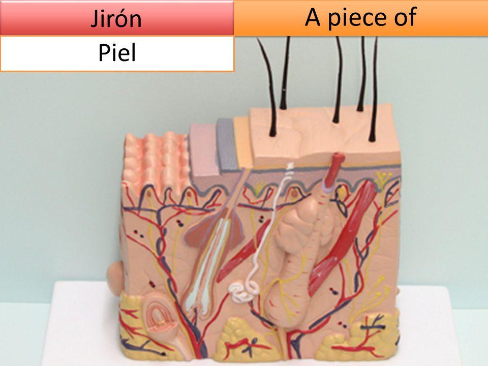 Jirón A piece of Piel