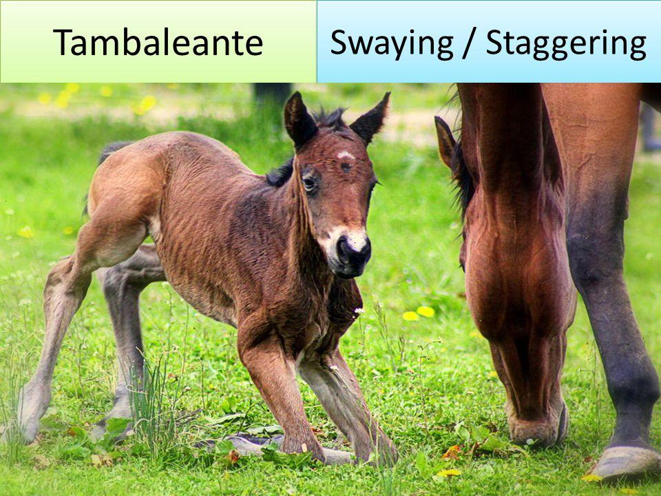 Tambaleante Swaying / Staggering
