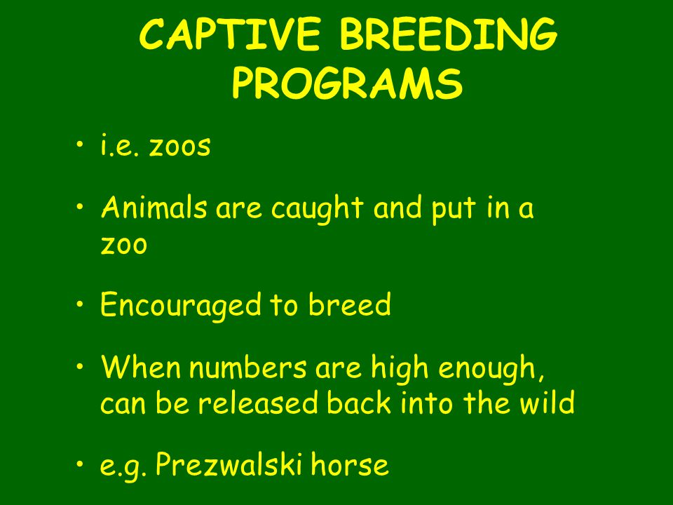 CAPTIVE BREEDING PROGRAMS i.e. zoos Animals are caught and put in a zoo Encouraged to breed When numbers are high enough, can be released back into th