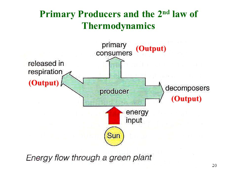 Photosynthesis and the 2 nd law of Thermodynamics What is the efficiency of photosynthesis 19
